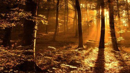 289279_Papel-de-Parede-Por-Do-Sol-Em-Outono-Na-Floresta_1920x1080
