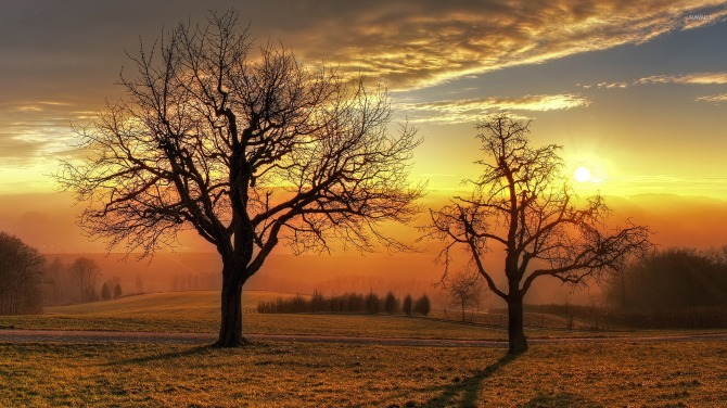 sunset-above-the-winter-trees-41387-1920x1080.jpg