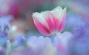 flower-perfect-garden-wallpapers-tulips-screensavers-gallery-desktop-200440